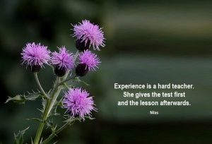 experience-is-a-hard-teacher