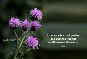 experience-is-a-hard-teacher